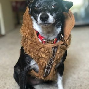 Star Wars harness perfect for Halloween!
